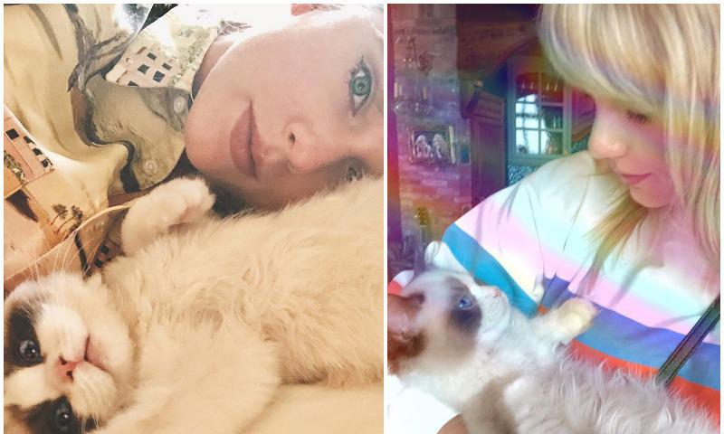 Taylor Swift's brother also loves her cats