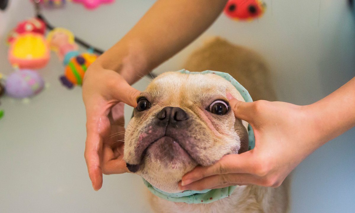 IMPORTANT THINGS YOU NEED TO KNOW ABOUT YOUR DOG - cover